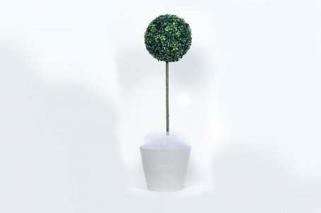 Topiary Tree 1 mtr